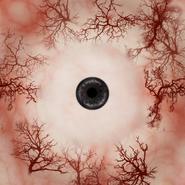 Eyeball r