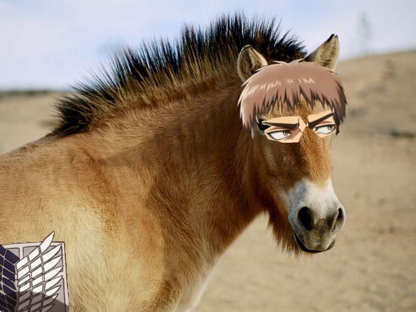 File:Horse Jean.jpg