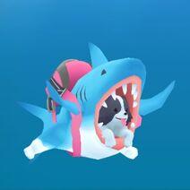 Shark Border Collie