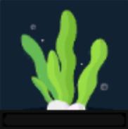 Seaweed-0