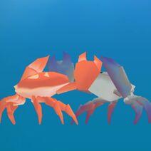 Warrior Gazami Crab