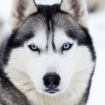 Taz Da Wolf's avatar