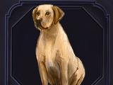 Familiar - Dog