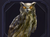 Familiar - Owl