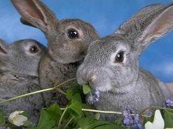 Fotos-conejos