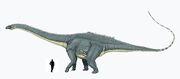 Diplodocus a escala