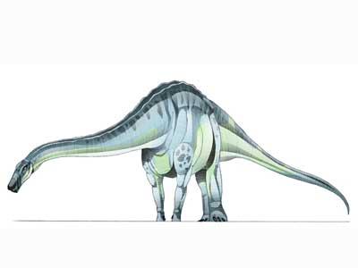 Quaesitosaurus-1