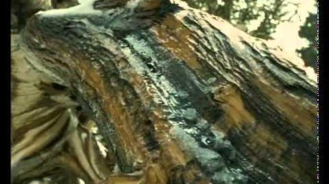 Caminando Entre Monstruos Vida Antes de los Dinosaurios (8).wmv