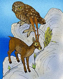 250px-Candiacervus ropalophorus