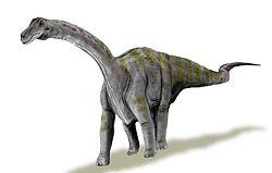 250px-Rapetosaurus BW