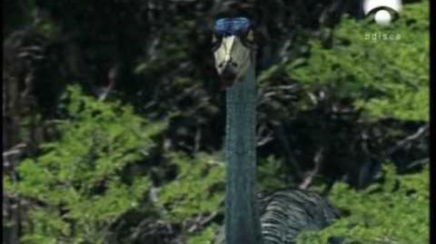 Parque Prehistórico - Capítulo 1 6 - La Vuelta del Tiranosaurio Rex 1 5