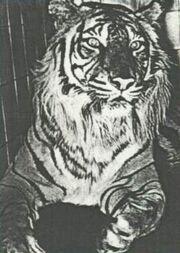1010080432 tigrejava