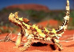 Moloch horridus diablo australiano