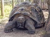 Tortuga de las islas Galápagos