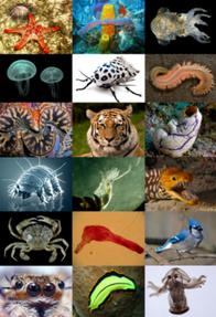 250px-Animal diversity
