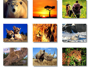 ANIMALES SALVAJES62F0
