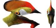 Reptil volador cuenca