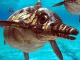 Ictiosaurios