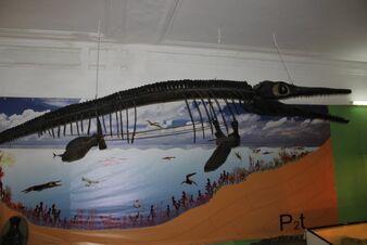 800px-Ундорозавр2