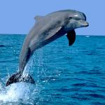 Selina400's avatar
