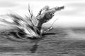 Samurai Splash.png