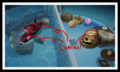 5-6 Orca Pool Photo.png