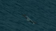 Seaharrier