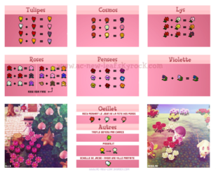 Hybrid Guide Remastered Acnl