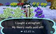 Stringfish Animal Crossing New Leaf Wiki Fandom Powered By Wikia