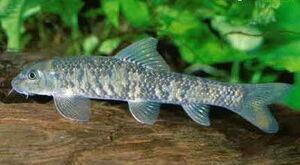 Docfish