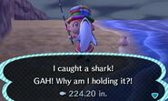 Shark x