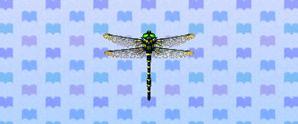 BandedDragonfly