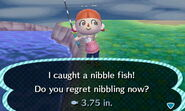 Nibble Fish