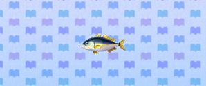 HorseMackerel