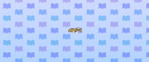 Nibblefish