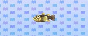 FreshwaterGoby