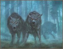 Corazan Mountain Wolf NM