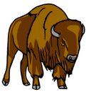 Bison clip art 5705