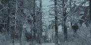Snow Gnats
