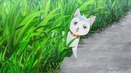 Saku's cat appearing in the grass