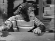 28.My.Son,.the.Chimp 073