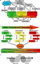 Addiction Pathology