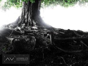 Alexandru-Vita-20060707104711-Burning-light