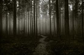 Creepy-forest1