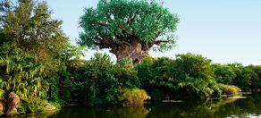 TREE 1 998