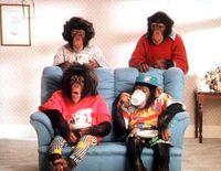 350full-pg-tips-chimps