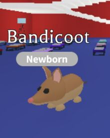 Am bandicoot