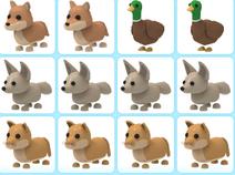 10 adopt