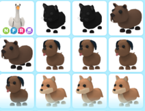 9 adopt
