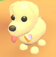 AM Lesbian Pride Pin on Dog